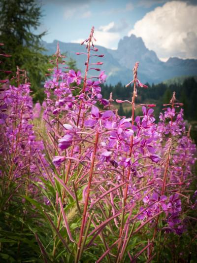 Von Croda di Lago nach Rifugio Coldai