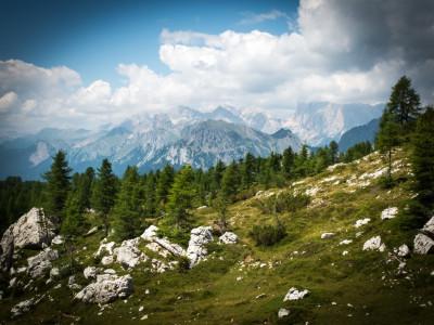 Kiefernwälder mit Fernblick