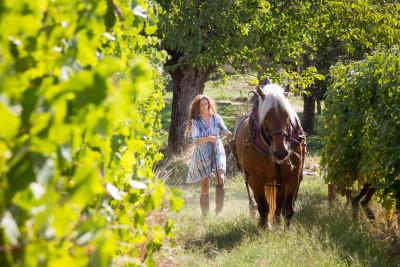 Massimiliana Spinola, Tassarolo, setzt auf Pferde bei der Bodenbearbeitung im Weinberg.