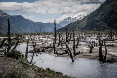 Tote Bäume vom Ausbruch des Vulkans Hudson im Río Ibañez