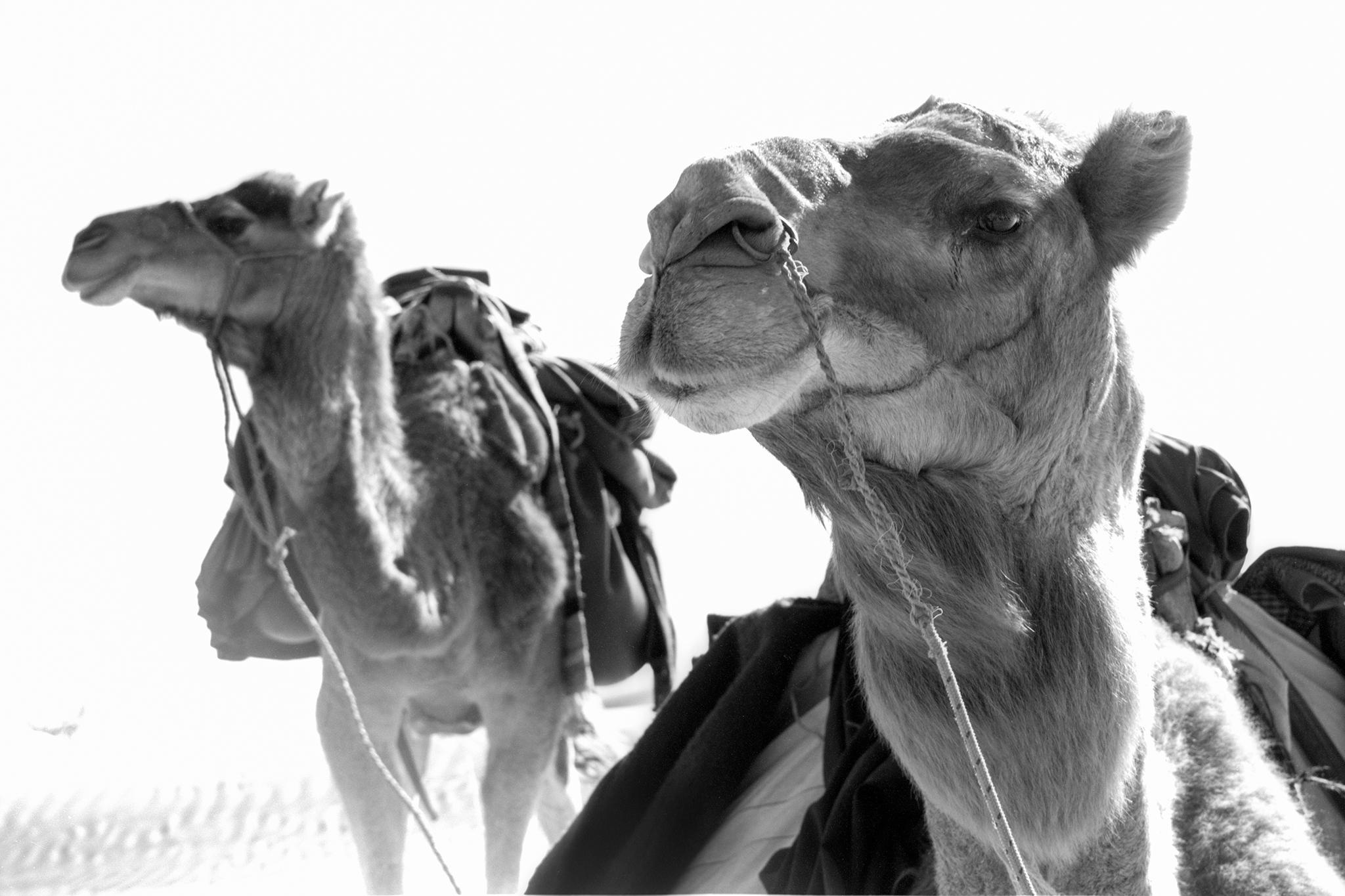 Sahara, Tunesien. 2003