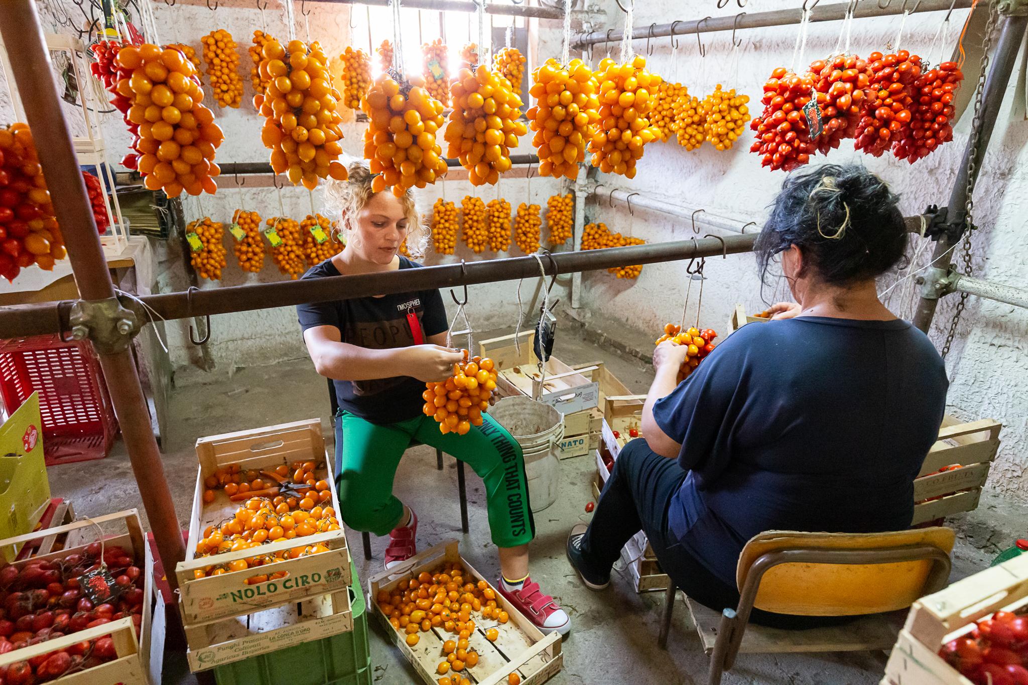 Pomodorino del Piennolo del Vesuvio D.O.P. werden von Antigone und Maria in Handarbeit zu großen Trauben geknüpt.